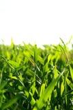 lawn royaltyfri fotografi
