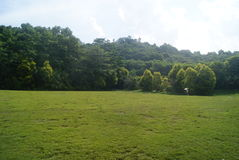 lawn royaltyfria foton
