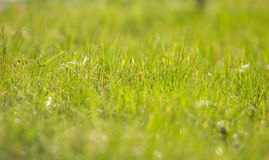 Free Lawn Royalty Free Stock Photo - 48001125