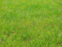 lawn royaltyfri bild