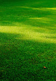Lawn. The lawn in the park morning Stock Image