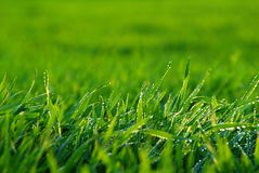 Lawn Royalty Free Stock Photos