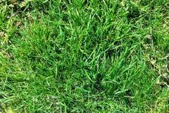 lawn arkivfoton