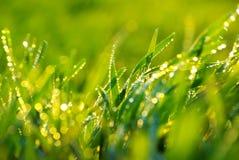 lawn royaltyfria bilder