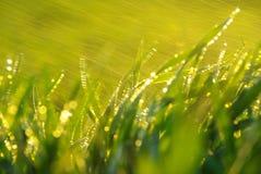 lawn arkivfoto