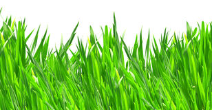 Lawn Royalty Free Stock Image