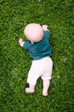 Lawn: Baby Exploring the Yard Stock Photo