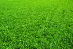 Lawn  background Royalty Free Stock Photography