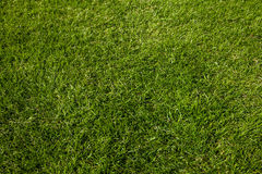 Lawn background Stock Photography
