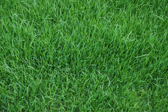 Lawn, background Stock Photography