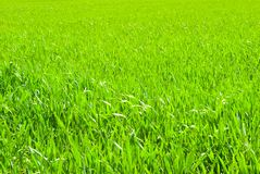 Lawn backgrounds Stock Photography
