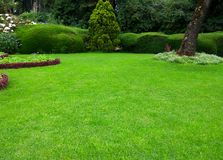 Lawn, Beatiful green grass garden