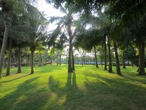 The lawn beneath the palm trees stock photo