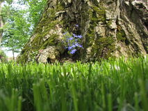 Lawn and blue flowers on the bark. Lawn and blue flowers on the old bark royalty free stock photo