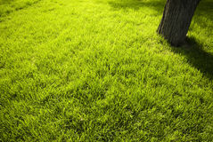 Lawn in a botanical garden Stock Photos