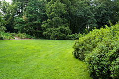 Lawn in a botanical garden. In Moscow with an bush stock photography