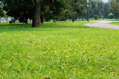 Lawn in a botanical garden in China with a tree Stock Images