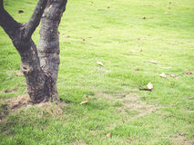 Lawn in a botanical garden in the park. Royalty Free Stock Images