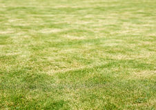 Lawn and burn marks Royalty Free Stock Photos
