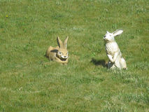 Lawn with ceramic rabbits Stock Image