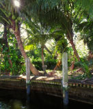 Lawn Chairs on Lush Tropical Riverside Stock Images