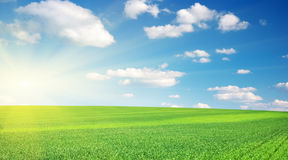 Lawn and cloudy sky. Stock Images