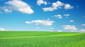 Lawn and cloudy sky. Stock Photo