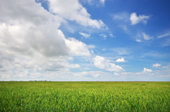 Lawn and cloudy sky. Royalty Free Stock Image