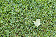 Lawn with clovers Stock Photography
