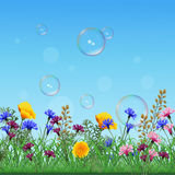 Lawn with colorful flowers and herbs. Lawn with multicolored flowers and grass on a background of sky and bubbles Royalty Free Stock Photography