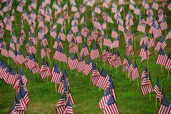 Lawn covered in small American flags Royalty Free Stock Photography