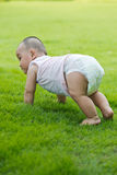 Lawn crawling baby in the park Stock Photos