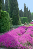 Lawn of crimson flowers among cypresses Stock Photo