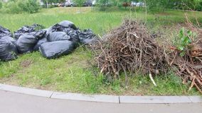 Cut branches and bags of garbage. On the lawn are cut branches and garbage collected in black bags stock video footage