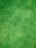 Lawn from cut green herb. Background from green clip herbs Royalty Free Stock Photography