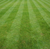 Lawn cut with stripes. Perfect Lawn cut with stripes Stock Photo