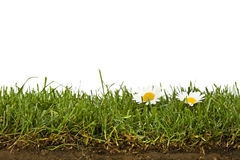 Lawn with daisies and soil cross-section isolated Stock Photo
