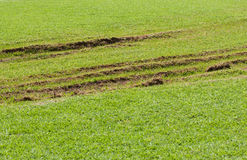 Lawn damaged by a vehicle Stock Photos