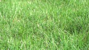 lawn stock video