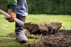 Lawn digging. Man using spade for old lawn digging Stock Photo