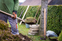 Lawn digging Royalty Free Stock Photos