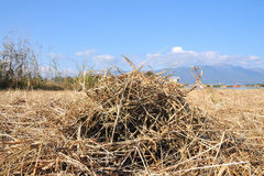 Lawn with dry hay to drought Stock Images