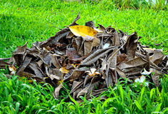 Lawn with dry leaf. Background Royalty Free Stock Images