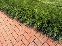 Lawn Edge Stock Images
