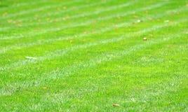 lawn för bakgrundsgräsgreen arkivbild