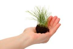 lawn för gräshandhuman royaltyfri fotografi