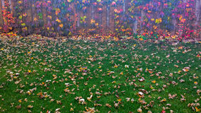 Lawn. A fall, green lawn with Fence Stock Images