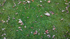 Lawn. A fall, green lawn with Fence Royalty Free Stock Photography