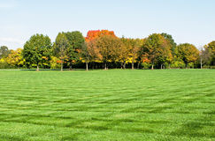 Lawn with Fall Trees Royalty Free Stock Photography