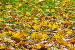 Lawn with fallen leaves Stock Images
